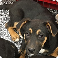 Adopt A Pet :: Frankie - Tucson, AZ