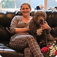 Adopt A Pet :: Guy Friendly - Canoga Park, CA