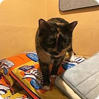 Adopt A Pet :: Charlotte - Boca Raton, FL