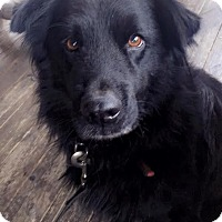 Adopt A Pet :: Riley - Charlotte, NC