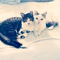 Adopt A Pet :: Bisquit and Nicholas - Hamilton, ON