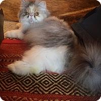 Adopt A Pet :: Mama's Girl - Columbus, OH