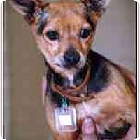 Adopt A Pet :: Stingray - Chesapeake, VA