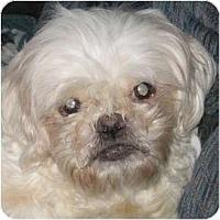 Adopt A Pet :: Josie-NJ - Mays Landing, NJ
