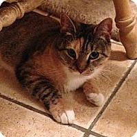 Adopt A Pet :: SABRINA - 2013 - Hamilton, NJ