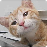 Adopt A Pet :: Tracy - Los Angeles, CA