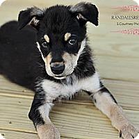 Adopt A Pet :: Tahoe - Mount Laurel, NJ