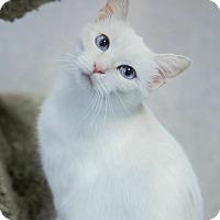 Adopt A Pet :: Iggy - Byron Center, MI