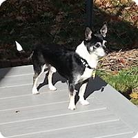Adopt A Pet :: Tico - Framingham, MA