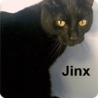Adopt A Pet :: Jinx - Medway, MA