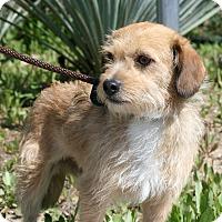 Adopt A Pet :: Mocha - Canoga Park, CA