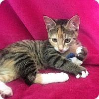 Adopt A Pet :: Princess Leia - Nolensville, TN