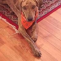 Adopt A Pet :: Tucker - Ocala, FL