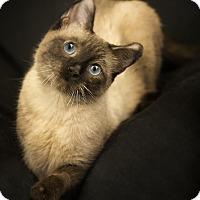 Adopt A Pet :: Mina - Anchorage, AK