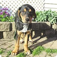 Adopt A Pet :: Gilda - West Chicago, IL