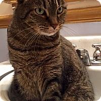 Adopt A Pet :: Daisy - Reston, VA