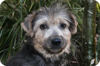 Terrier (Unknown Type, Medium)/Terrier (Unknown Type, Small) Mix Dog for adoption in North Palm Beach, Florida - Patty