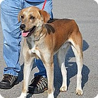 Adopt A Pet :: Tucker - Hamilton, ON