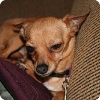 Adopt A Pet :: Wiley - Commerce City, CO