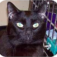 Adopt A Pet :: Daisy - Annapolis, MD