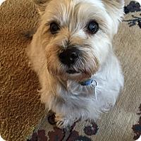 Adopt A Pet :: Louie - Garwood, NJ