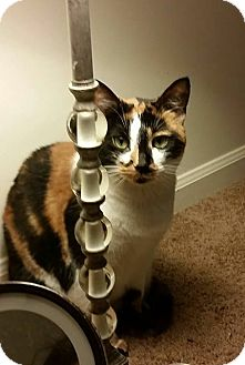 Calico Cat for adoption in Wilmore, Kentucky - Roxy