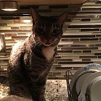 Adopt A Pet :: Jake - Lauderhill, FL