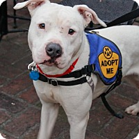 Adopt A Pet :: Baloo (Needs Foster/Has Application) - Washington, DC