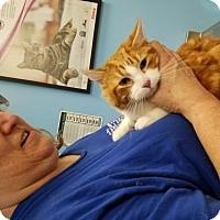Adopt A Pet :: Tobi - Los Angeles, CA