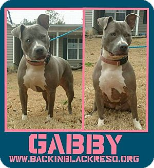 Pit Bull Terrier Mix Dog for adoption in Tower City, Pennsylvania - Gabby