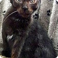 Adopt A Pet :: Budd - Alexandria, VA