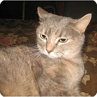 Adopt A Pet :: Zoey - New Egypt, NJ