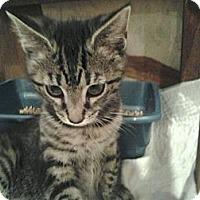 Adopt A Pet :: Firefly - Island Park, NY
