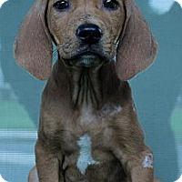 Adopt A Pet :: Justin - South Jersey, NJ