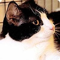 Adopt A Pet :: Tex - Victor, NY