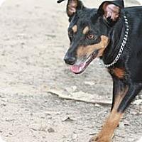 Adopt A Pet :: JINNY JOY - Bryan, TX