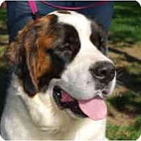 Adopt A Pet :: Daisy - Bellflower, CA