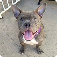 Adopt A Pet :: Yoda - West Hills, CA