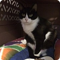 Adopt A Pet :: Baby Girl - Byron Center, MI