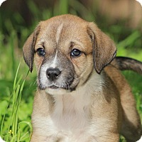 Adopt A Pet :: Misty - Austin, TX