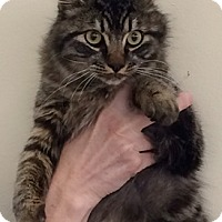 Adopt A Pet :: Tygger - North Highlands, CA