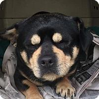 Adopt A Pet :: Bert - Los Angeles, CA