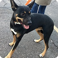 Adopt A Pet :: Mindy - Phoenix, AZ