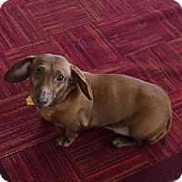 Adopt A Pet :: Gretta - Louisville, CO