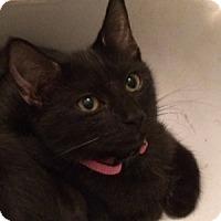 Adopt A Pet :: Bianca - Cocoa, FL