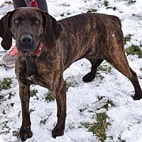 Adopt A Pet :: Belle - Lisbon, OH