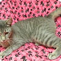 Adopt A Pet :: Kimmy - Columbus, NE
