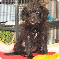Adopt A Pet :: Melana - available 6/3 - Sparta, NJ