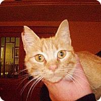 Adopt A Pet :: Miss Polly - Walnut, IA