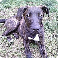 Adopt A Pet :: Lady - Grand Rapids, MI